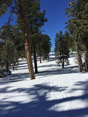 Skiing among the trees